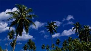 6-karkar-palms