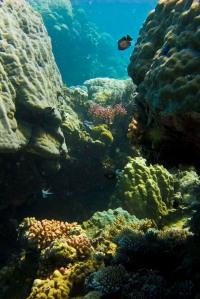 coral-canyon