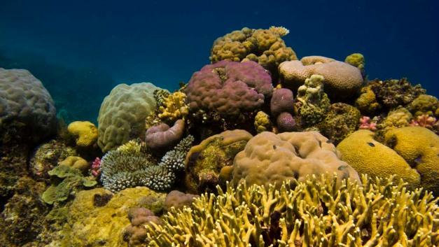 coral-tones