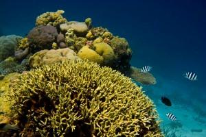 gbr-coral-fish