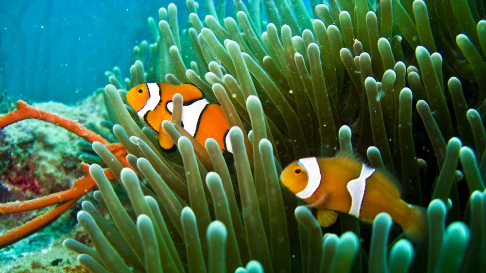 This wreck is the bomb er wanderlust for Buy clown fish