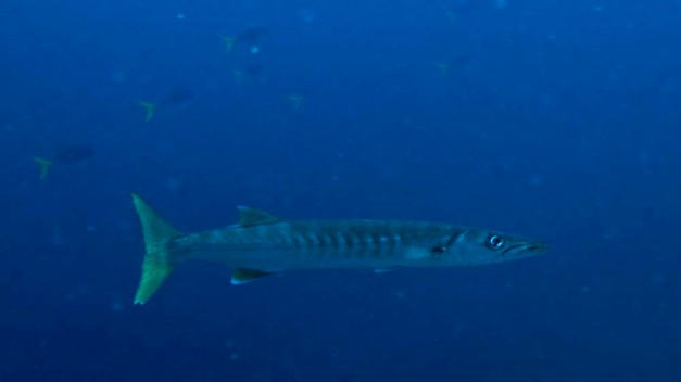 barracuda-sek-passage