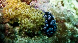 nudi-and-sponge