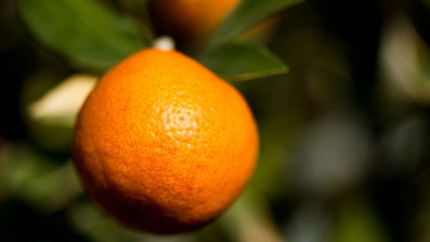 orange-dof