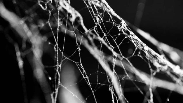 15-cotton-webbing
