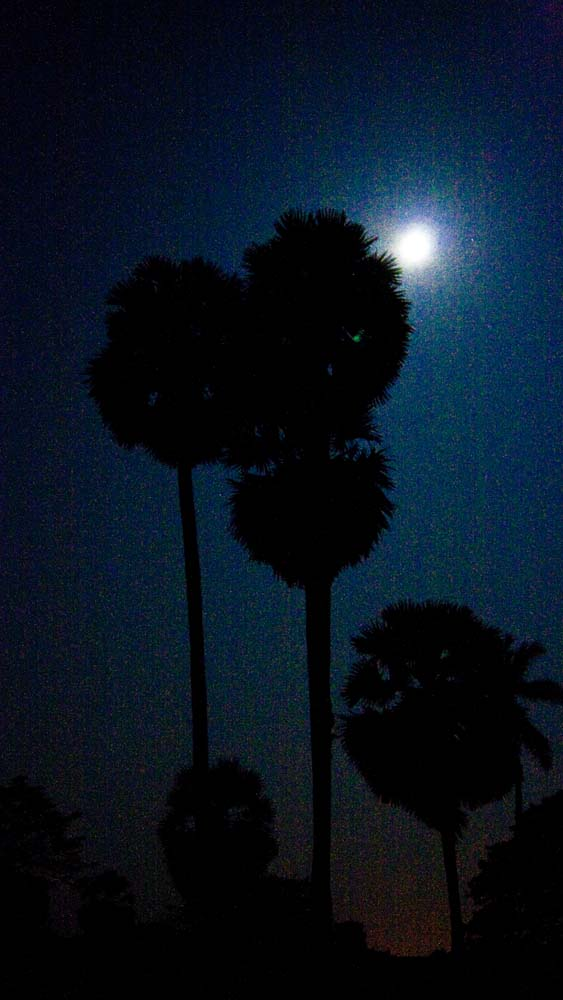 palms-backlit-by-moon-handheld
