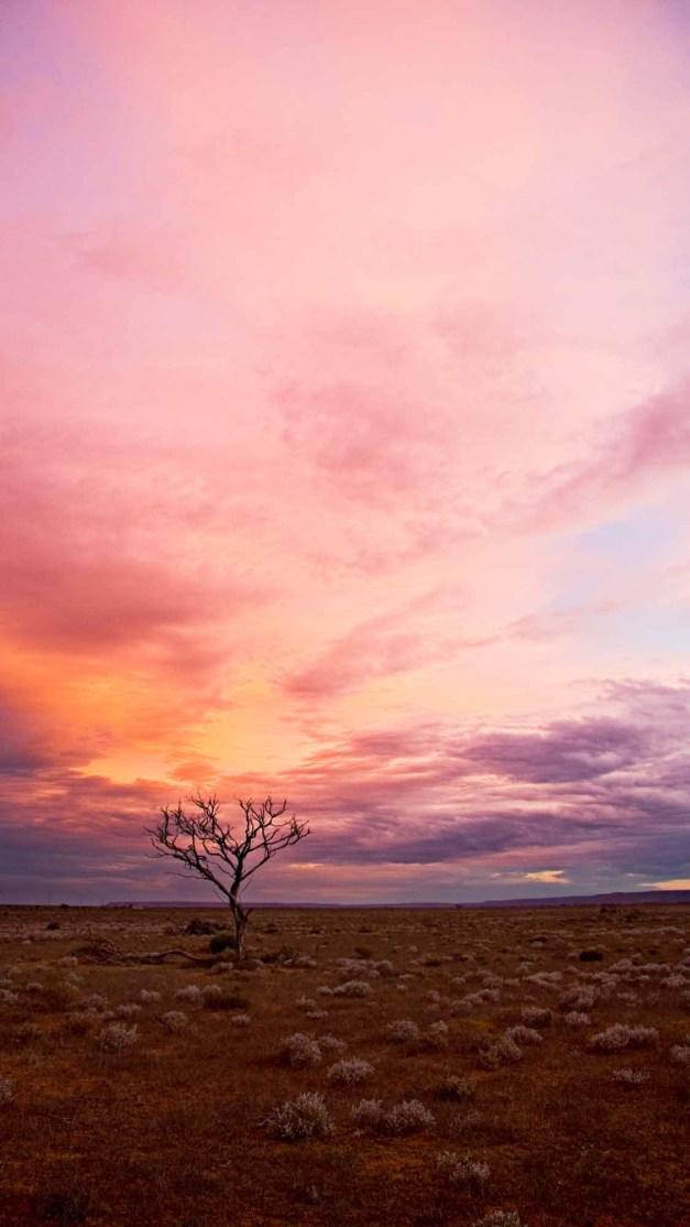 pink-sky-tree