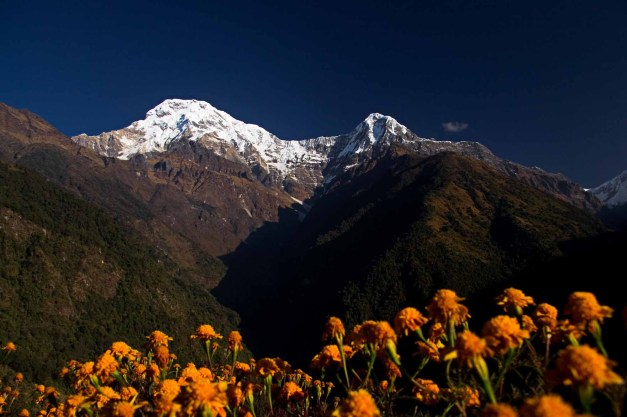 Annapurna South Flowers Chomrong