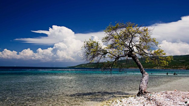 Beachside Tree