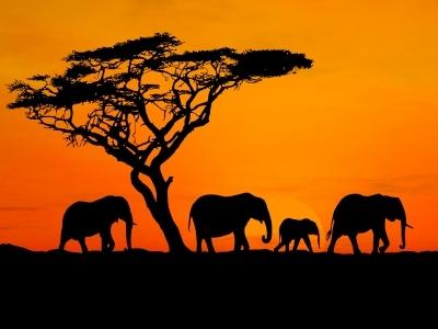 Africa Cliche
