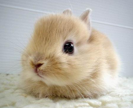 I was going to put a photo of a child bride and a wisecrack here, but opted for this fluffy bunny instead.